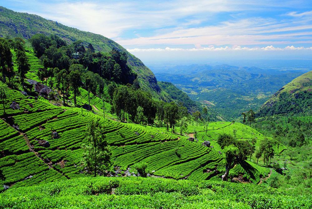 Kelionė į Šri Lanką (egzotinės kelionės) Fotka