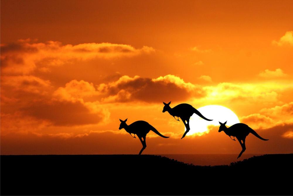 Kelionė į Australiją (egzotinės kelionės) 01