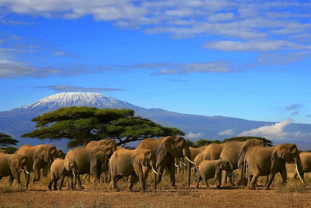 Kelionė į Keniją (egzotinės kelionės) 04