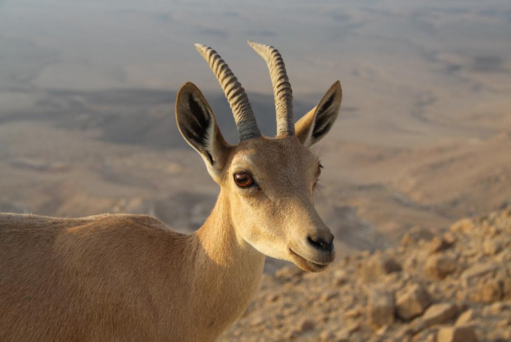 Kelionė į Izraelį (egzotinės kelionės) 17