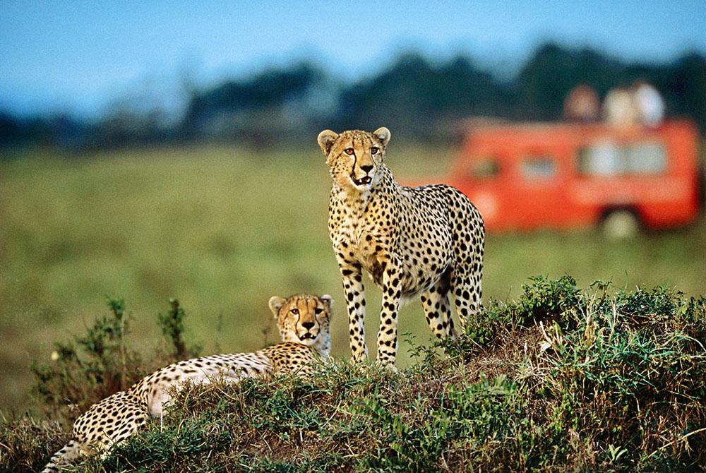 Kelionė į Keniją (egzotinės kelionės) 19