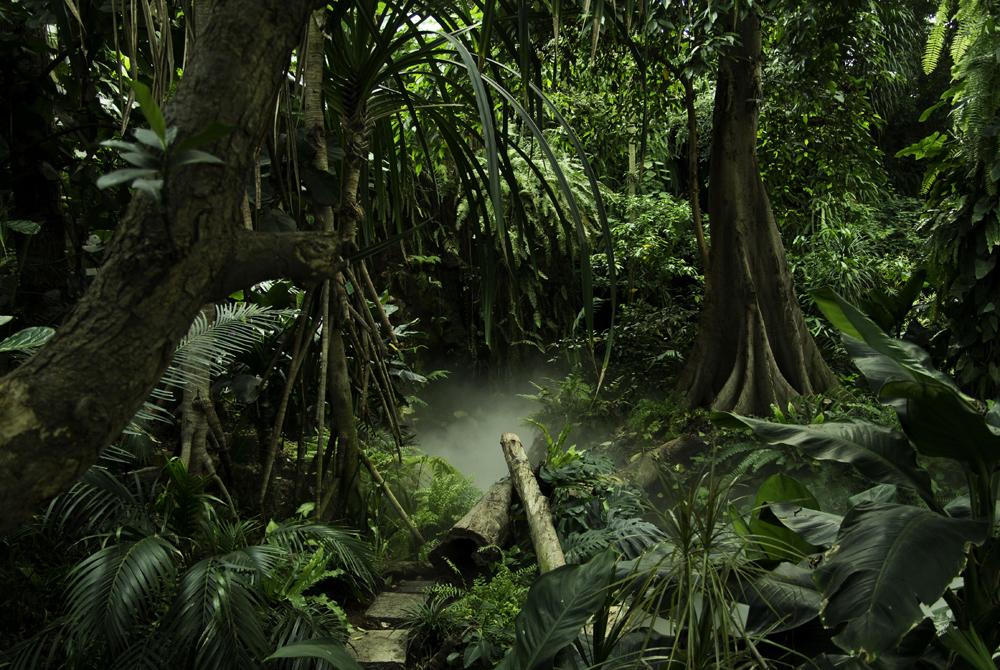 Kelionė į Kolumbiją (egzotinės kelionės) SONY DSC