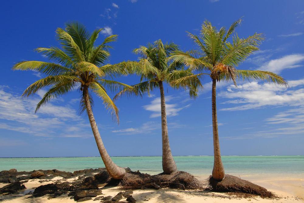 Kelionė į Madagaskarą (egzotinės kelionės) 23