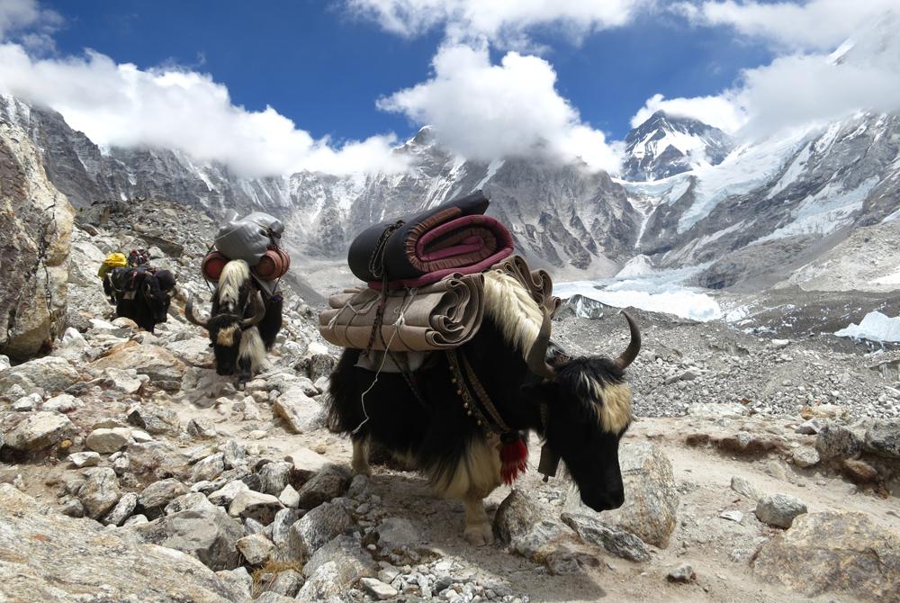 Kelionė į Nepalą ir Butaną (egzotinės kelionės) 24