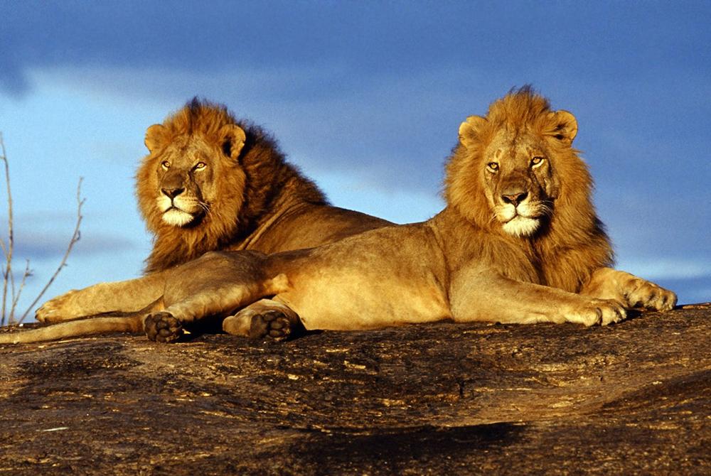 Kelionė į Keniją (egzotinės kelionės) 45