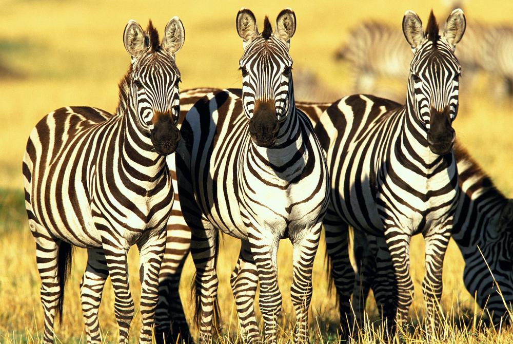 Kelionė į Keniją (egzotinės kelionės) 46