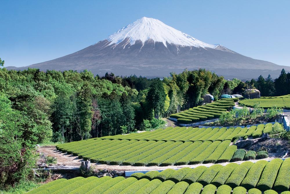 Kelionė į Japoniją (egzotinės kelionės) 9