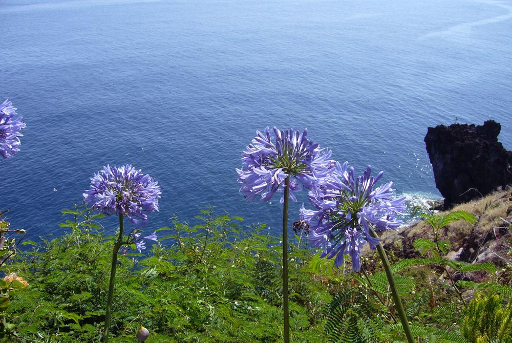 Kelionė į Madeirą (egzotinės kelionės) 9