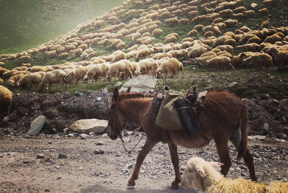 Armenija (34)